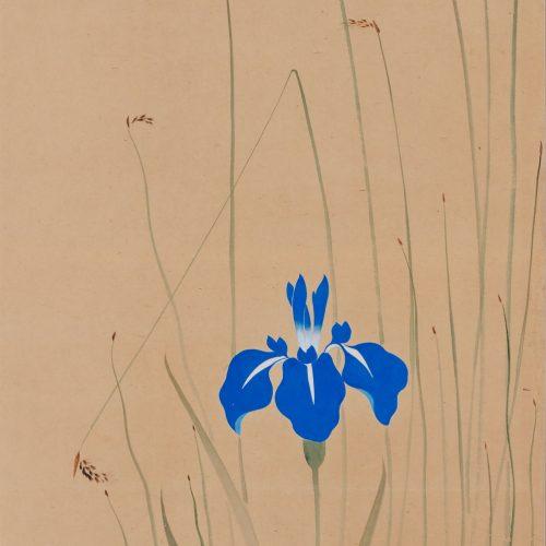Suzuki Kiitsu (1796-1858) - japanese painting. iris. Seisei Kiitsu 菁々其一