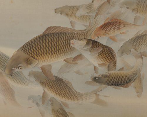 Matsunaga Tensho (1897-1945). Japanese scroll painting. Group of carp or koi. Image of close-up.