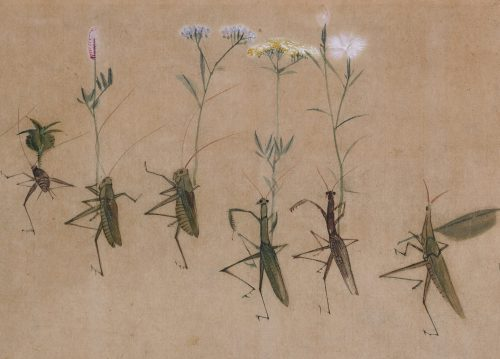 Yokoyama Seiki (1792-1864). Insects in parody of a daimyo procession. Praying mantis detail.