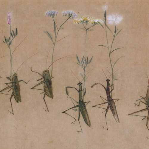 Yokoyama Seiki (1792-1864). Insects in parody of a daimyo procession. Praying mantis detail.