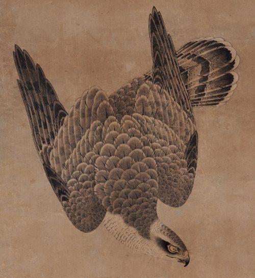 Mitani Toshuku (1577-1654). Unkoku School. Japanese falcon painting. Hawk detail.