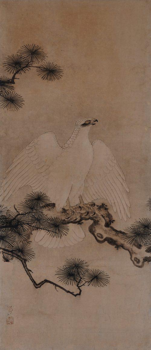 Mitani Toshuku (1577-1654). Unkoku School. Japanese hawk painting. white pine.